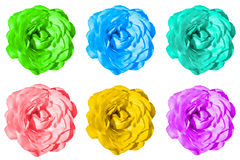 Het pak van gekleurd nam geïsoleerde bloemenmacro toe Stock Foto's