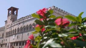 Het paleis van Priori van Palazzodei in Perugia achter rozerode bloemen, nadrukverschuiving, Italië stock video