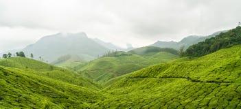 Het panorama munnar India van theeaanplantingen royalty-vrije stock foto's