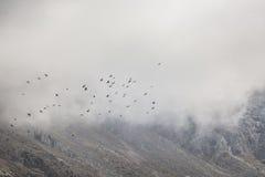 Het panorama van berglandschap van kloof ala-Archa in de som Royalty-vrije Stock Foto