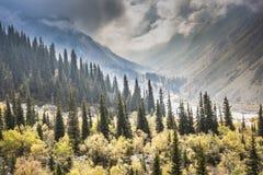 Het panorama van berglandschap van kloof ala-Archa in de som Royalty-vrije Stock Afbeeldingen