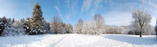 Het panorama van bomen die met sneeuw worden behandeld Stock Foto's