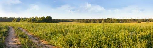 Het panorama van de de zomerweide Stock Fotografie