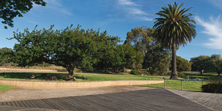 Het panorama van de eik en van de palm Stock Afbeeldingen
