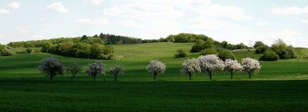 Het panorama van de lente Royalty-vrije Stock Foto