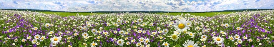 Het panorama van het de lentelandschap met bloeiende bloemen op weide stock afbeeldingen