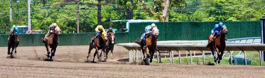 Het Panorama van de paardenkoers stock foto's