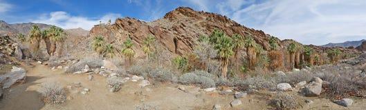 Het Panorama van de palmcanion Stock Fotografie