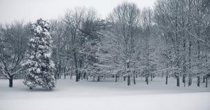 Het Panorama van de sneeuw Royalty-vrije Stock Foto