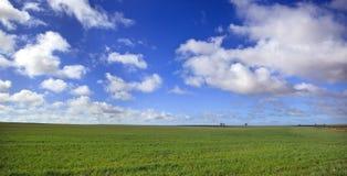 Het Panorama van de weide Stock Afbeelding