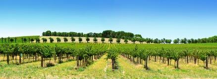 Het Panorama van de wijngaard stock foto's