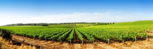 Het Panorama van de wijngaard Royalty-vrije Stock Afbeeldingen