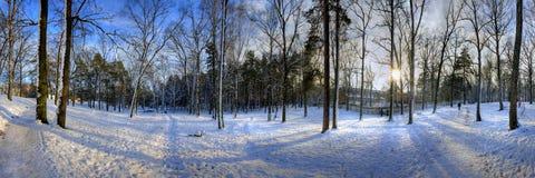 Het panorama van de winter Stock Afbeelding