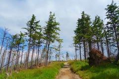 Het panorama van een Beskydy-bergen strekt zich in Malinowska Skala, Szczyrk, Silezische Beskid, Polen uit Royalty-vrije Stock Foto