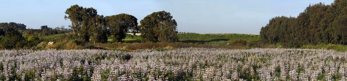 Het panorama van het gebied royalty-vrije stock afbeelding