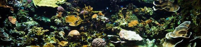 Het panorama van het koraalrif Stock Foto's
