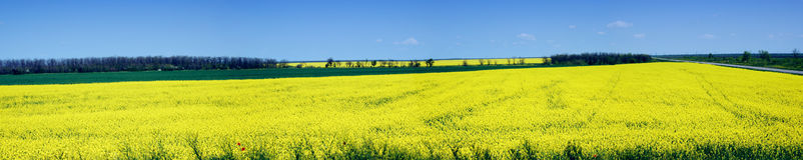 Het panorama van het landschap Royalty-vrije Stock Foto