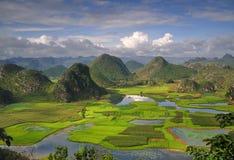 Het panorama van het moerasland Stock Afbeeldingen
