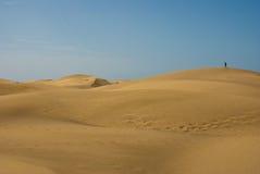 Het panorama van het zandduinen van de woestijn Stock Fotografie