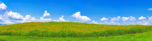 Het panorama van mooi groen gebied met gele kosmos bloeit Royalty-vrije Stock Afbeeldingen