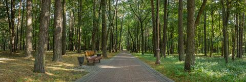 het panorama van het openbare stadspark met een bank op de rand van een keurige schaduwrijke steeg voerde met lange bomen royalty-vrije stock foto's