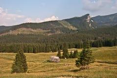 Het panorama van Tatrybergen van Kalatowki-chalet stock afbeeldingen