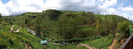 Het panorama van theeaanplantingen in Nuwara Eliya Royalty-vrije Stock Foto
