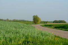 Het panoramalandschap van de lentegebieden met vers groen gras en appl Stock Afbeeldingen