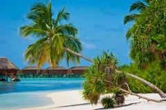 Het paradijs van de vakantie Stock Foto's
