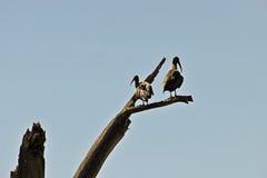 Vogels op boom Royalty-vrije Stock Foto's