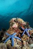 Het paradijs van de zeester? Royalty-vrije Stock Foto