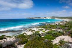 Het paradijs van het kangoeroeeiland Stock Foto