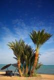 Het paradijsstrand van de palm stock foto's