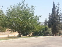 Het park in anana van Ra `, Israël Stock Foto