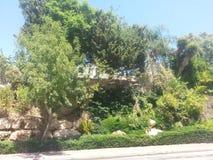 Het park in anana van Ra `, Israël Royalty-vrije Stock Afbeelding