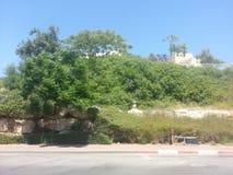 Het park in anana van Ra `, Israël Stock Afbeeldingen