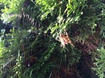 Het park bloeit Insectinsect royalty-vrije stock foto's