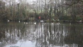 Het Park Cornwall Engeland het UK van het Tehidyland stock footage