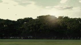 Het park in de ochtend stock footage