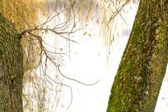 In het park door het meer Stock Foto