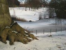 Het Park Dublin, Ierland in de sneeuwbomen, bevroren meer van Phoenix royalty-vrije stock foto