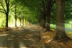 Het park en de zonlicht van de geheimzinnigheid Stock Afbeeldingen