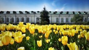Het Park het Kremlin van Moskou Stock Foto