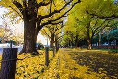 Het Park` s Ginkgo Weg van meiji-Jingugaien royalty-vrije stock foto's