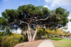 Het Park van Balboa Royalty-vrije Stock Fotografie