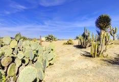 Het park van Balboa in San Diego, cactuswoestijn. Stock Afbeeldingen