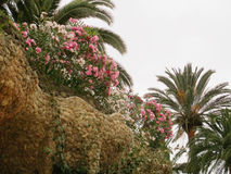 Het Park van Barcelona Guell Stock Fotografie