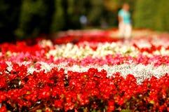 Het park van bloemen Stock Afbeeldingen