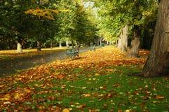 Het park van Cardiff Stock Fotografie