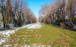 Het park van Cismigiu Royalty-vrije Stock Foto's